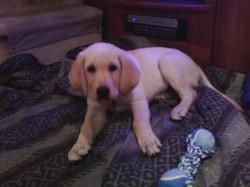 Drago as a pup