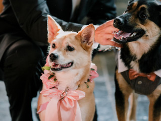 Man's Best Friend: How to Include Your Dog in Your Wedding