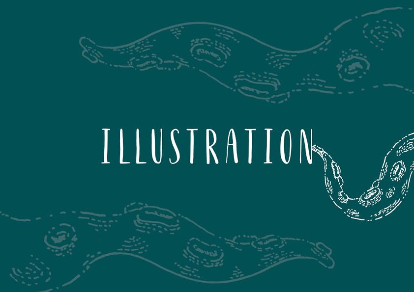 portfolio din - illustration