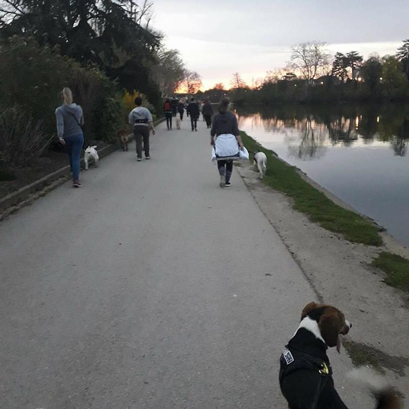 Cani-Marche  Cani-Cross