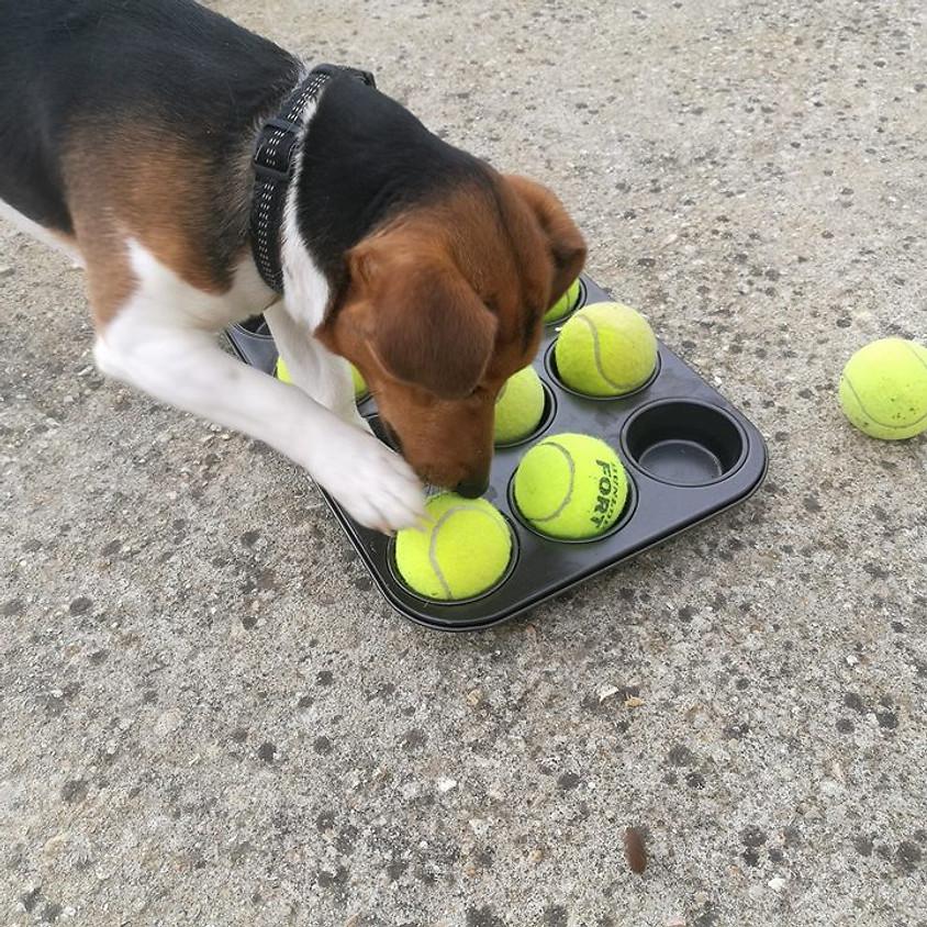 Enrichissement du milieu canin