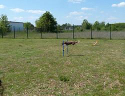 CANI CAT'S CENTER Auxerre