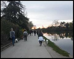 Cani marche et cani cross Auxerre