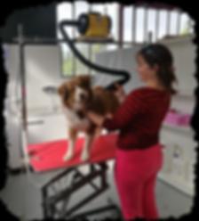 Toilettage auxerre - Self toilettage auxerre - Toilettage self-service auxerre - Cani cat's center