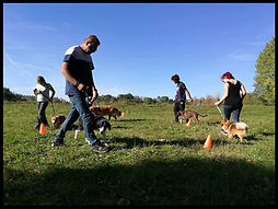 Dog'n'play Auxerre jeux canins