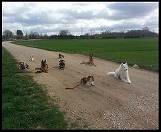Séance à thème éducation canine Auxerre