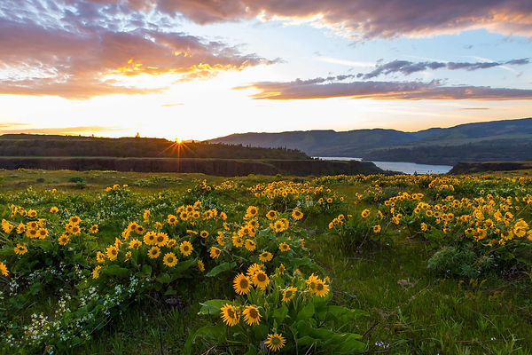 Rowena-Wildflowers.jpg
