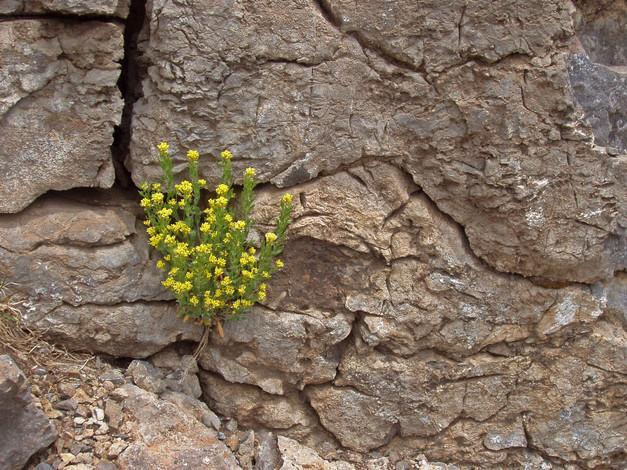 Flowers In Stone