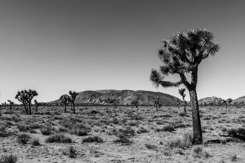 Joshua Tree National Park Ryan Mountain