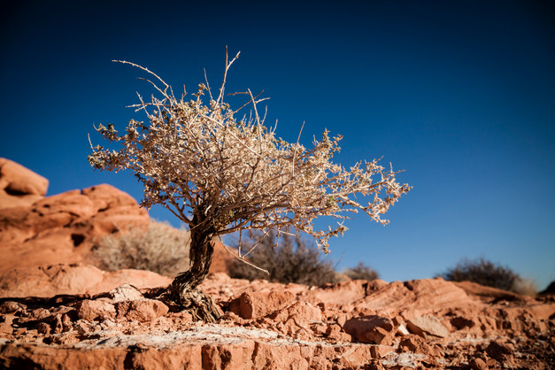 Tiny Tree In Desert