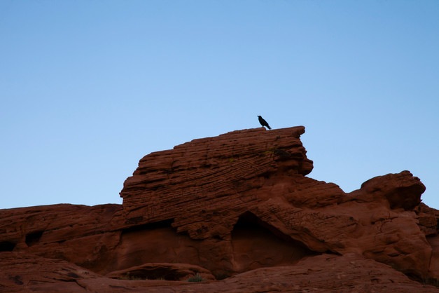 Sentinal On Rocks