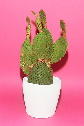 Powder Paper Kaktus.jpg