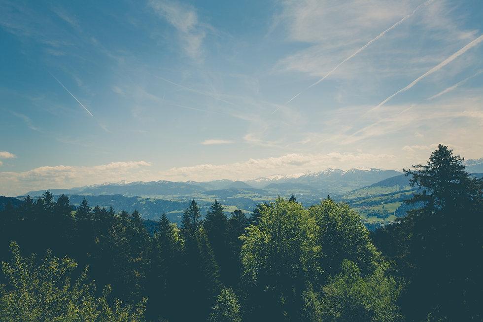 forest-landscape-mountain-range-129105.j