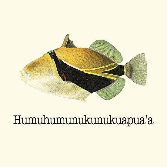 Humuhumu Coaster