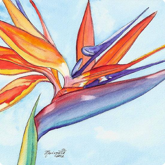 MT Bird of Paradise Coaster