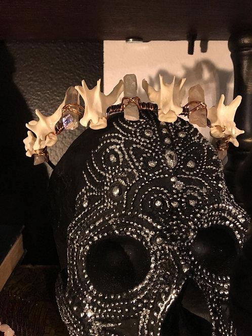 Cat Vertebrae Crown