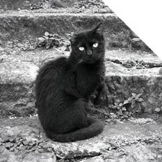 - CATS, DOGS & BIRDS -