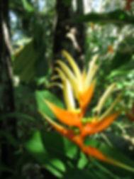 Belize 2008 A 289.jpg