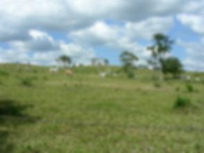 Belize 2008 C 013.jpg