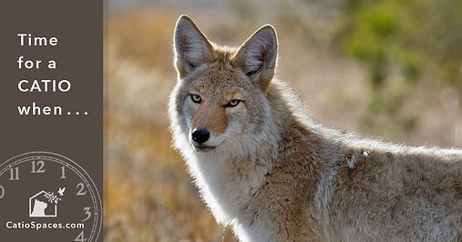 catio-cat-enclosure-time-coyote-catiospa