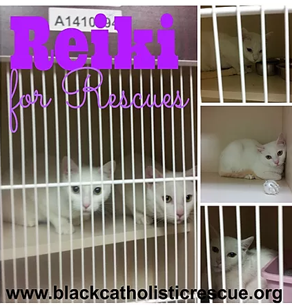 BCHR Reiki for Rescues.png