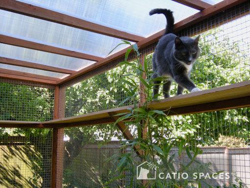 catio-cat-enclosures-bandit-int-catiospa