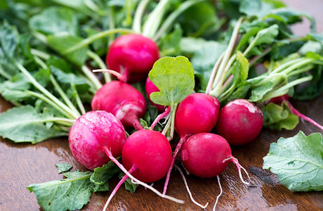 bunch-of-newly-picked-farm-fresh-radishe