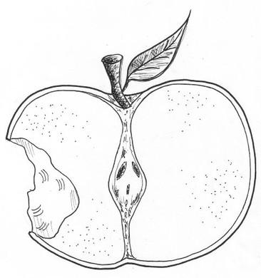 CC14 maçãx.jpg
