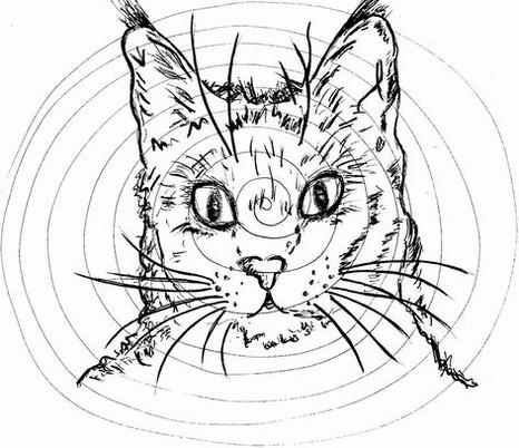 C11 gatox.jpg