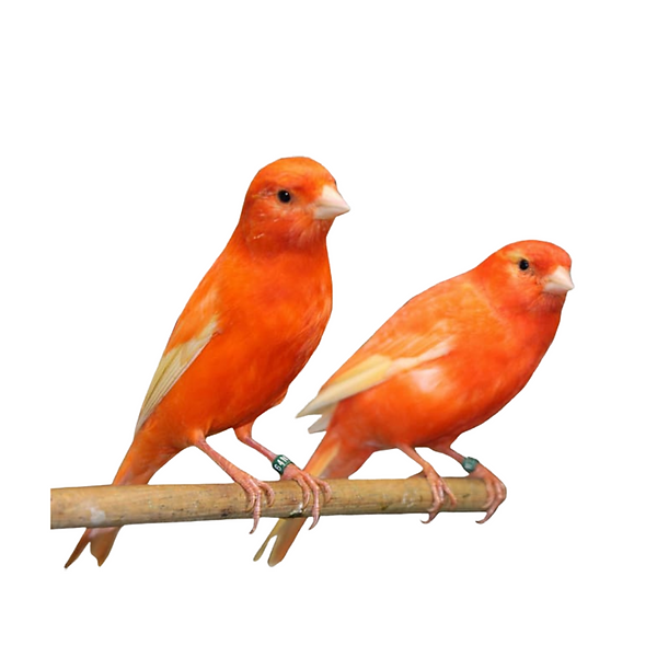 2 BIrdies.png