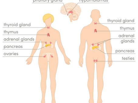 Bio-Identical Hormone Therapy | 10 Amazing Benefits