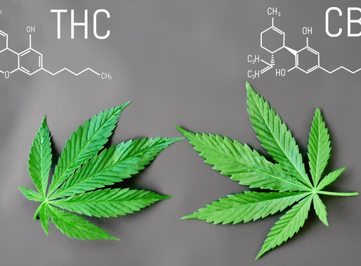 THC and CBD Marijuana| Benefits for your health