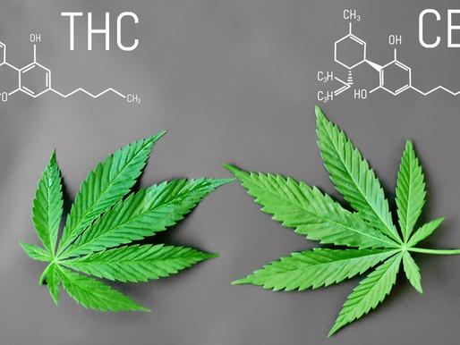 THC and CBD Marijuana| Benefits for your health