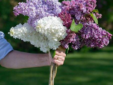 How To Heal & Feel Happy Using Lilacs