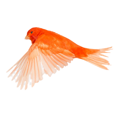 Birdy Flying.png