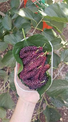 תות אפגני