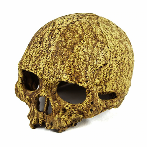 Pangea Skull Hide