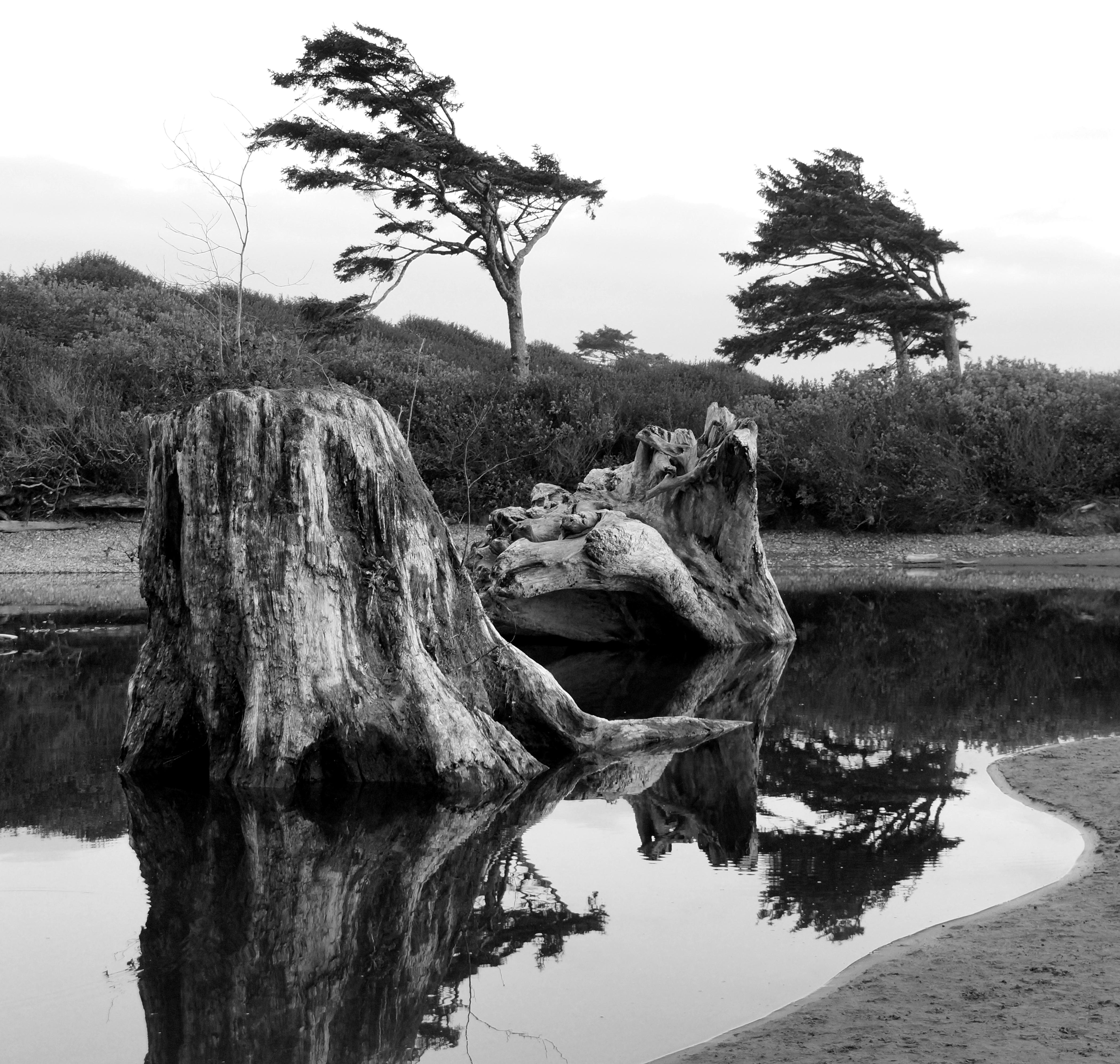 Driftwood Reflection | Washington