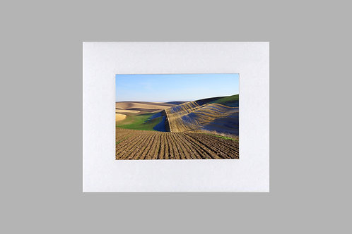 20 x 24 Matted Print - Colorful Wheat Field