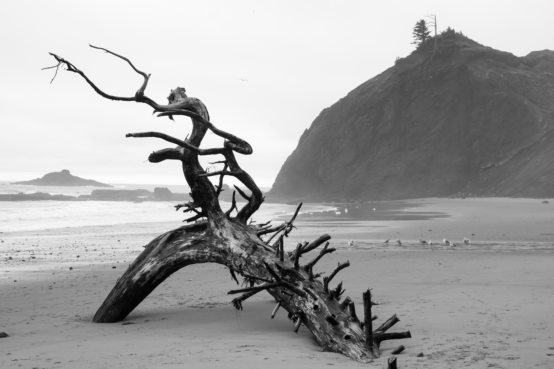 Driftwood Dancer | Oregon