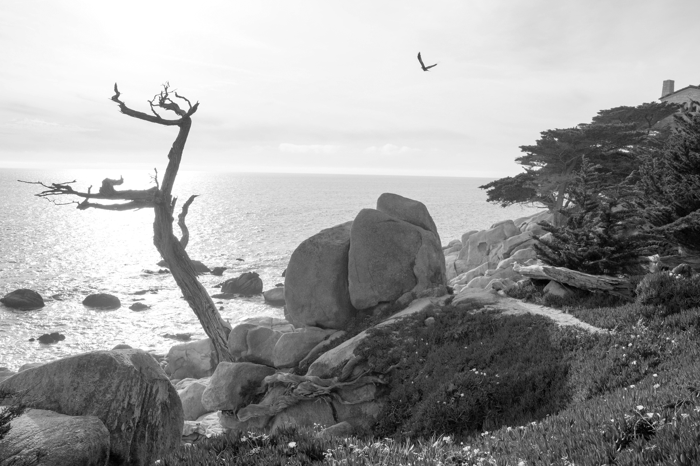 Mimicry | Pebble Beach, California