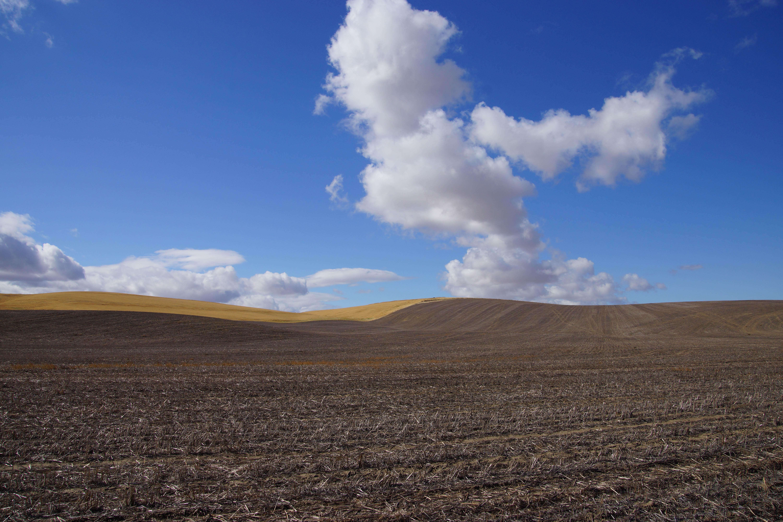 Minimalist Landscape | Oregon