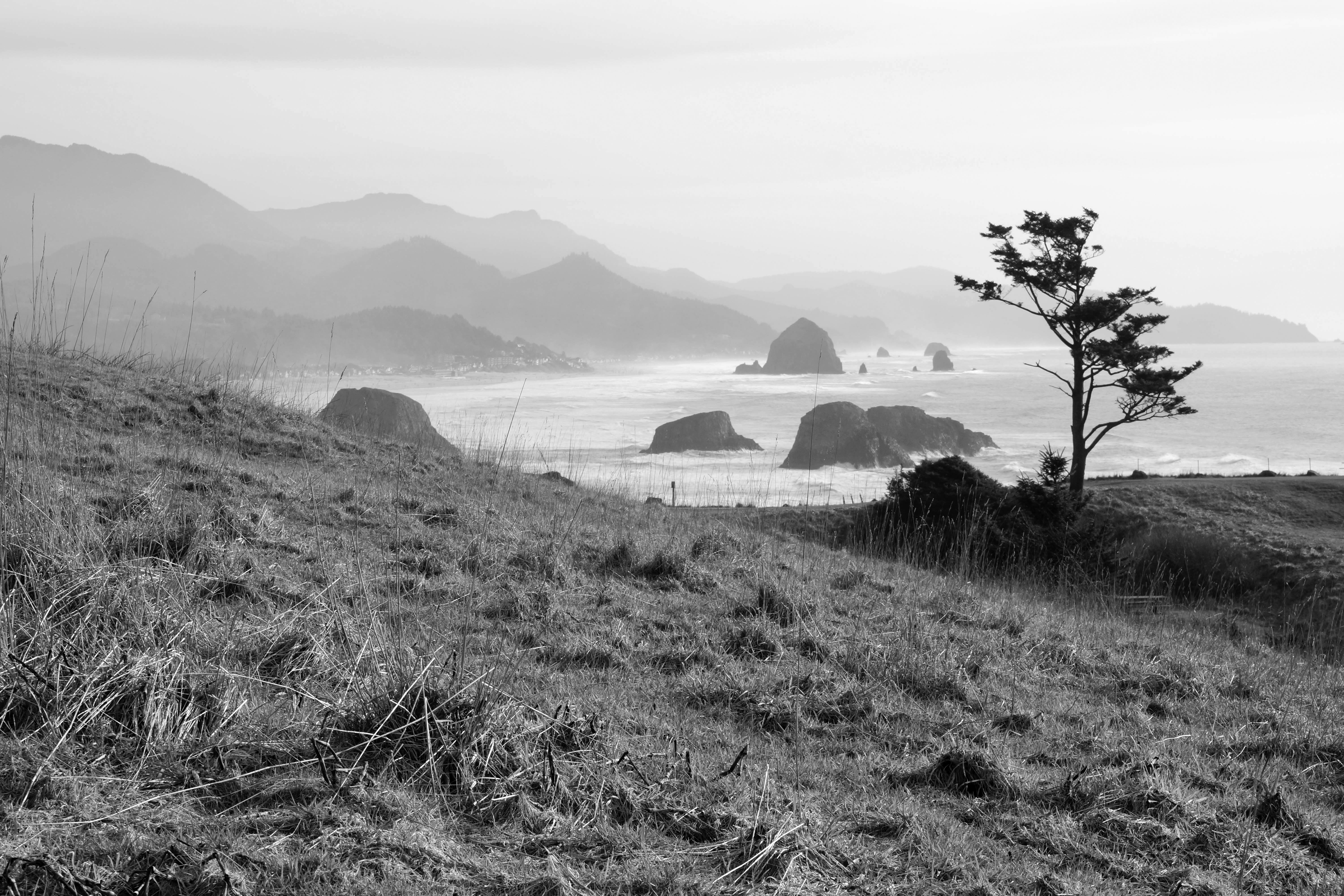 Lone Tree | Ecola State Park
