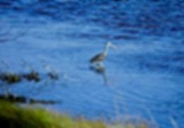 White Ibis 05a, Carolina, 24-10-87.jpg