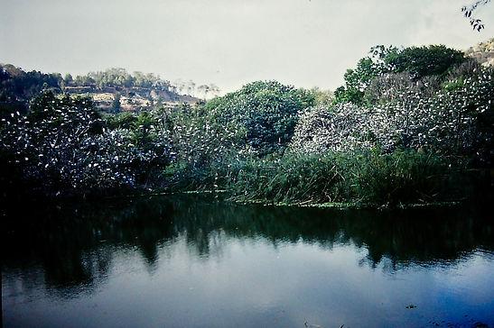 Madagascar 02a, Antananarivo zoo, 1_11_8