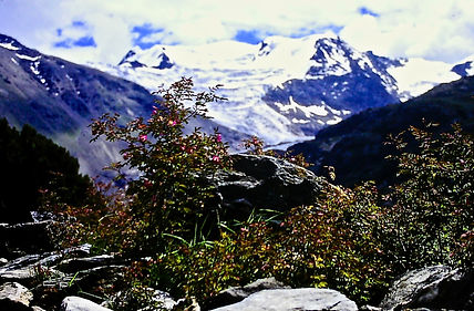 Italy 20a, mountain rose sp., Alps, Stel