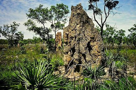 Australian Termite mound 04a, Litchfield