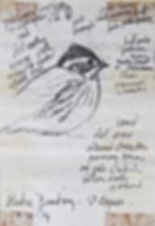 Rustic Bunting, LAT, St Agnes, 10_10_79.