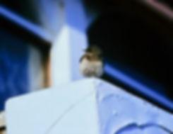 Pied Wheatear 01a, Torquay, 6-12-83.jpg