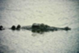 Estuarine Crocodile 06a, Kakadu, 29_11_9
